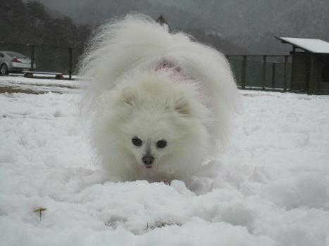 京都の山で雪遊び_b0177436_20412692.jpg