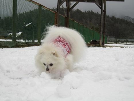 京都の山で雪遊び_b0177436_2042092.jpg
