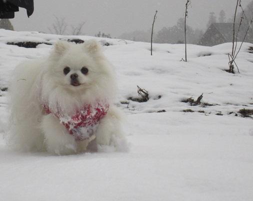 京都の山で雪遊び_b0177436_2045101.jpg