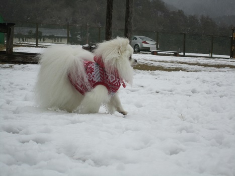 京都の山で雪遊び_b0177436_20482674.jpg