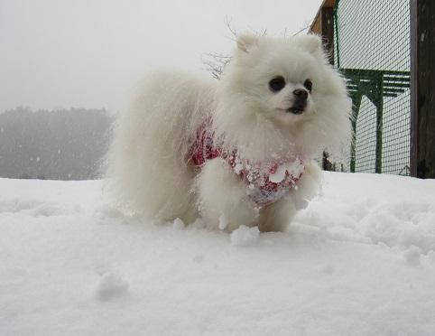 京都の山で雪遊び_b0177436_20513515.jpg