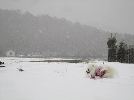 京都の山で雪遊び_b0177436_20562138.jpg