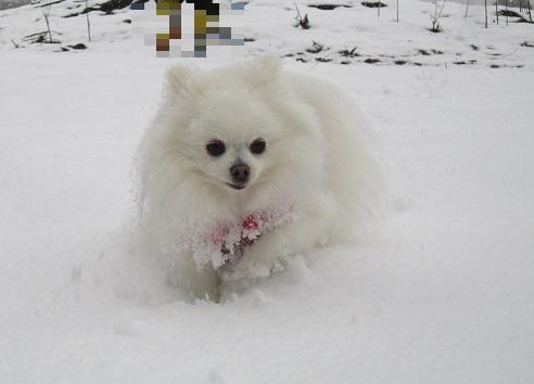 京都の山で雪遊び_b0177436_2102018.jpg