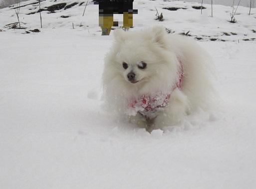 京都の山で雪遊び_b0177436_2105481.jpg