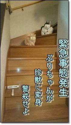 珍成人ぶりこ_b0151748_11284709.jpg