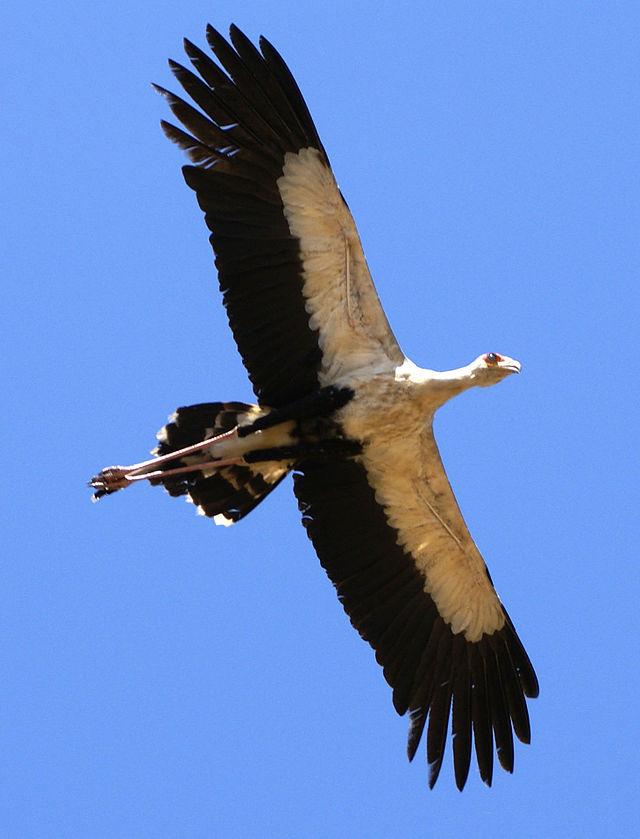 説教:翼を広げ。イザヤ40:31_f0234165_7535377.jpg