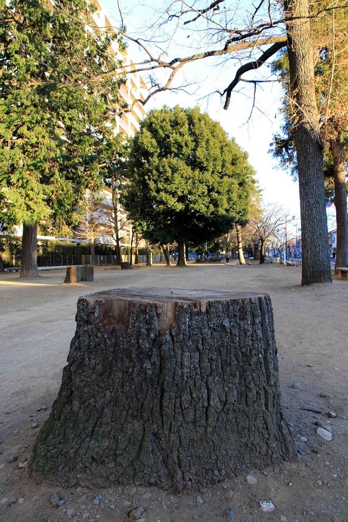 切り株放置で有名な福岡中央公園_a0107574_16594719.jpg