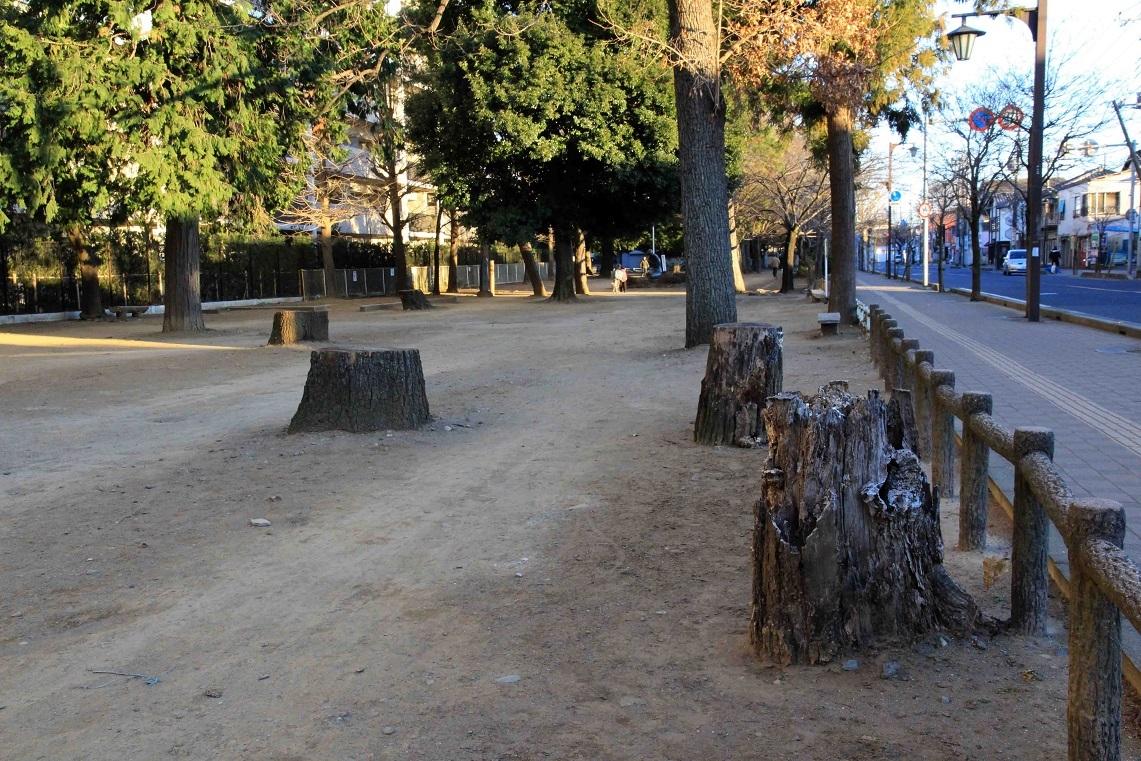 切り株放置で有名な福岡中央公園_a0107574_17000021.jpg