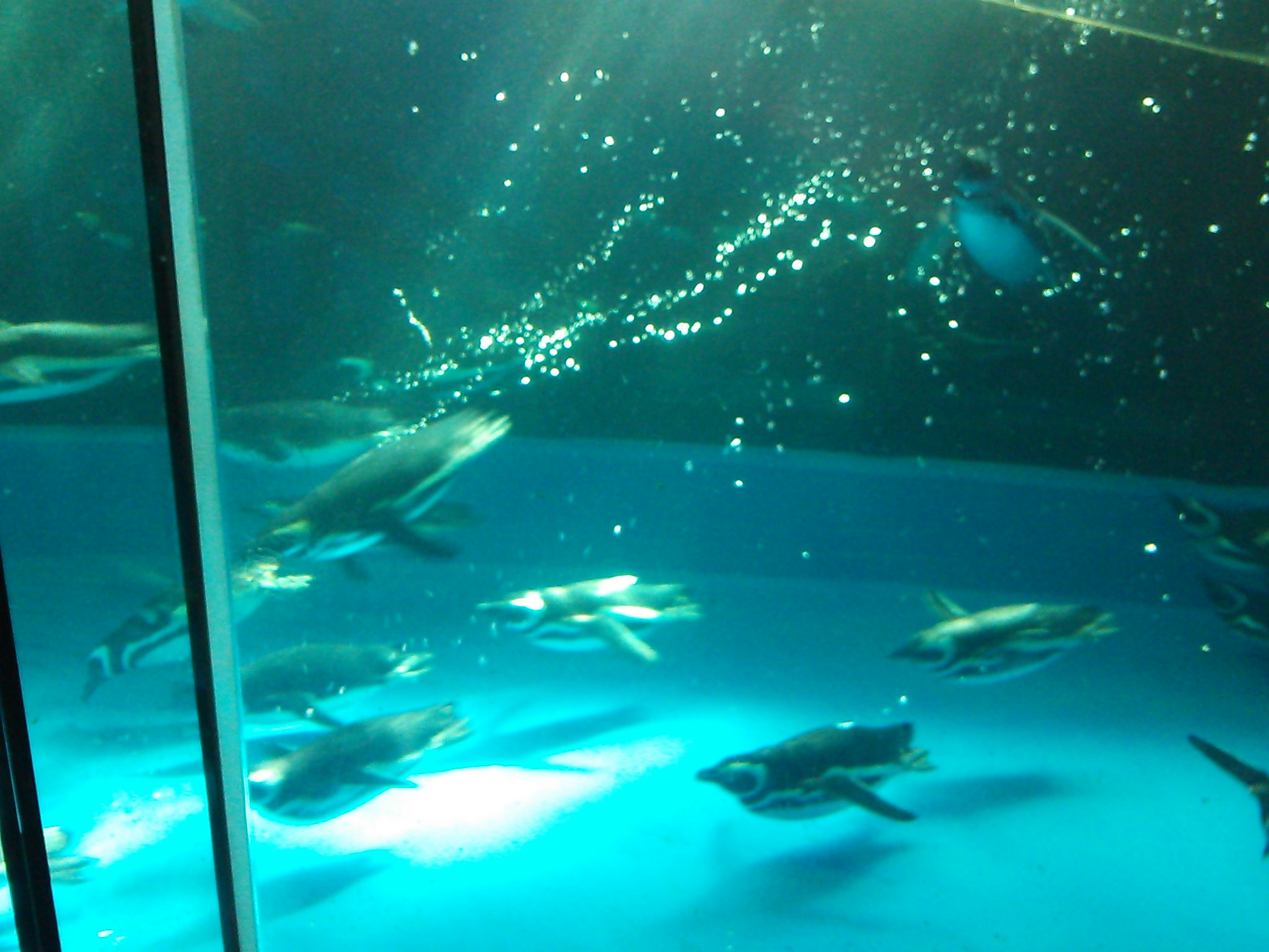 須磨水族館_f0172281_14392261.jpg