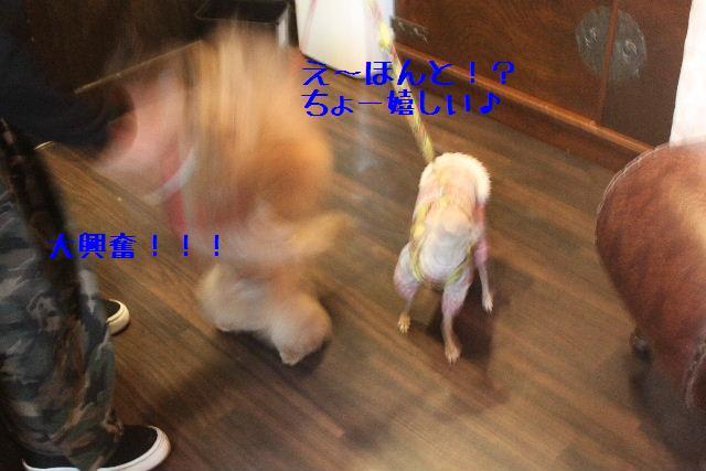 b0130018_10242492.jpg