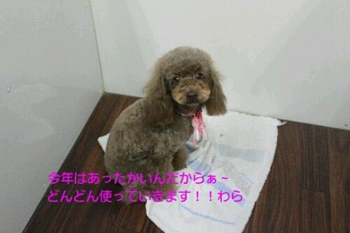 b0130018_16363512.jpg