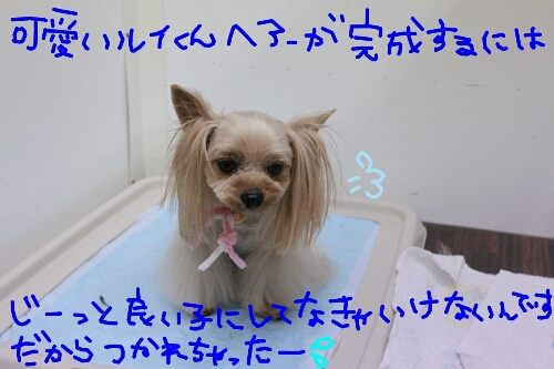 b0130018_985326.jpg