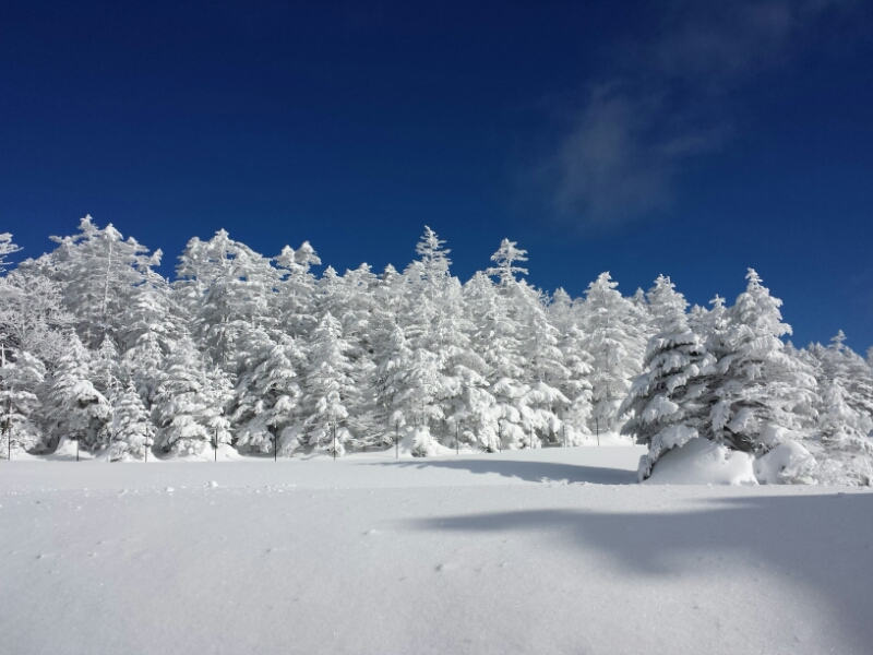 連休最終日の雪具合_e0155231_2331537.jpg