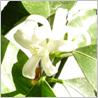 ニールズヤードレメディーズの春のおすすめ商品です。_c0227633_1541246.jpg