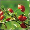 ニールズヤードレメディーズの春のおすすめ商品です。_c0227633_1652784.jpg