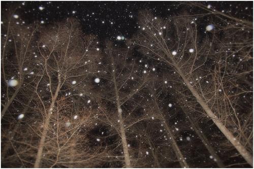 snowfall(降雪)_d0101050_11283757.jpg