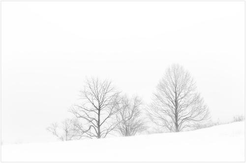 whiteout(ホワイトアウト)_d0101050_1281278.jpg
