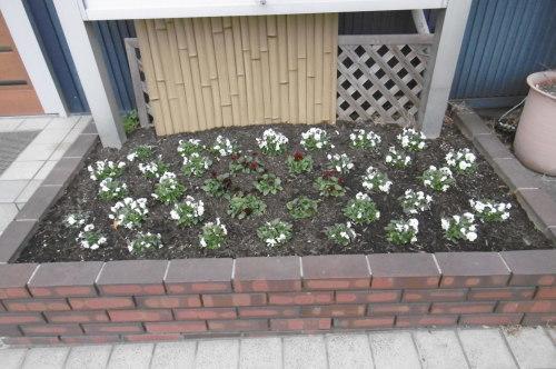冬の花壇_f0205367_17242844.jpg