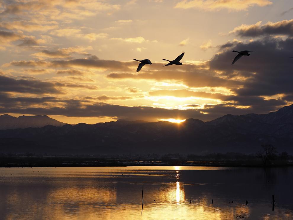 福島潟の夜明_e0214470_20302834.jpg