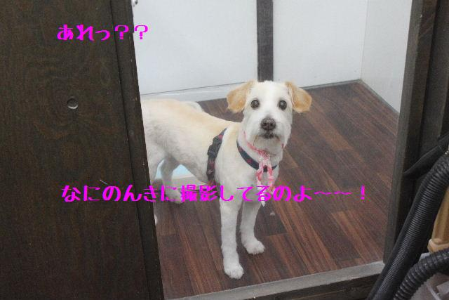 b0130018_1554192.jpg
