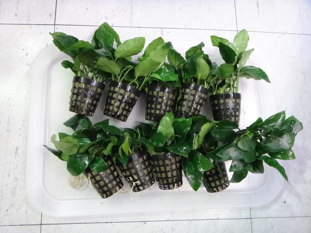150115 熱帯魚・水草・観葉植物_f0189122_139344.jpg