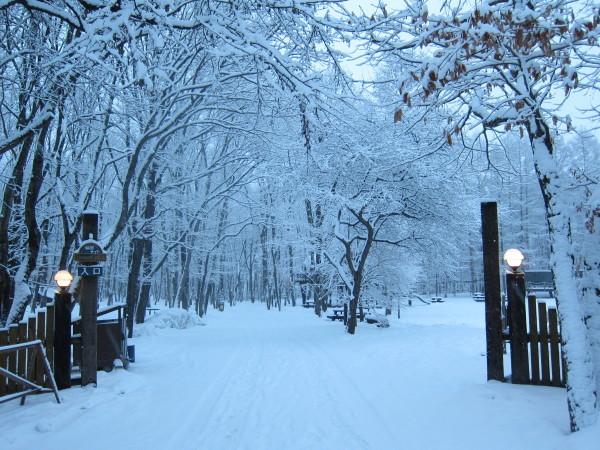 冬来りなば雪は降る_b0174425_17414548.jpg