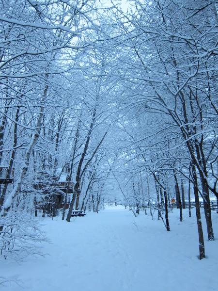 冬来りなば雪は降る_b0174425_17451699.jpg