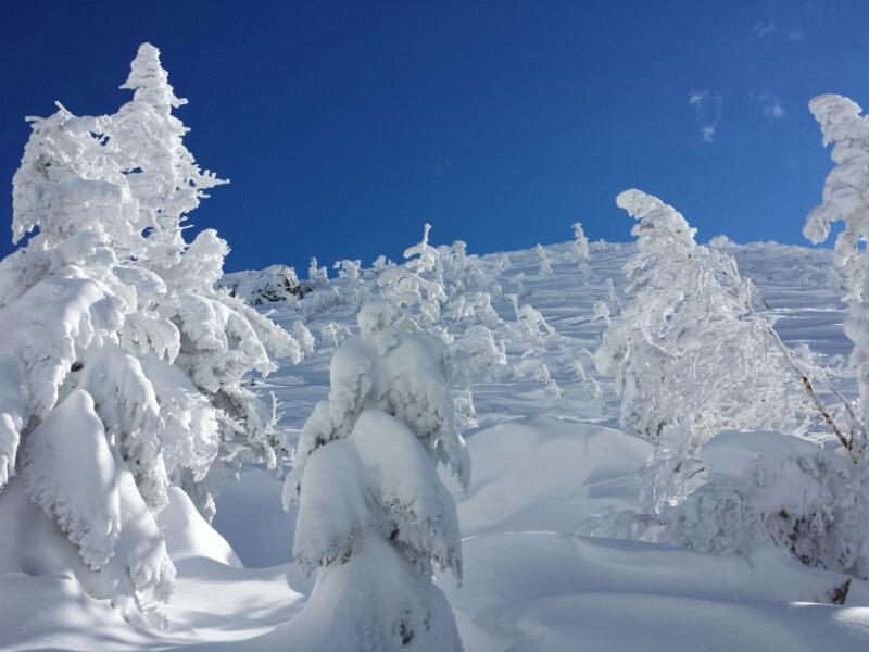 下山の日の登山道_e0155231_20304222.jpg