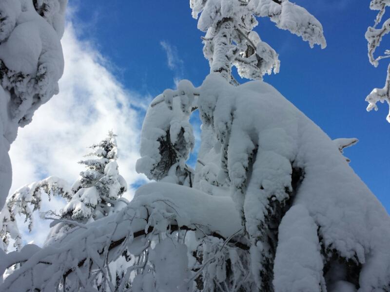 下山の日の登山道_e0155231_20314689.jpg