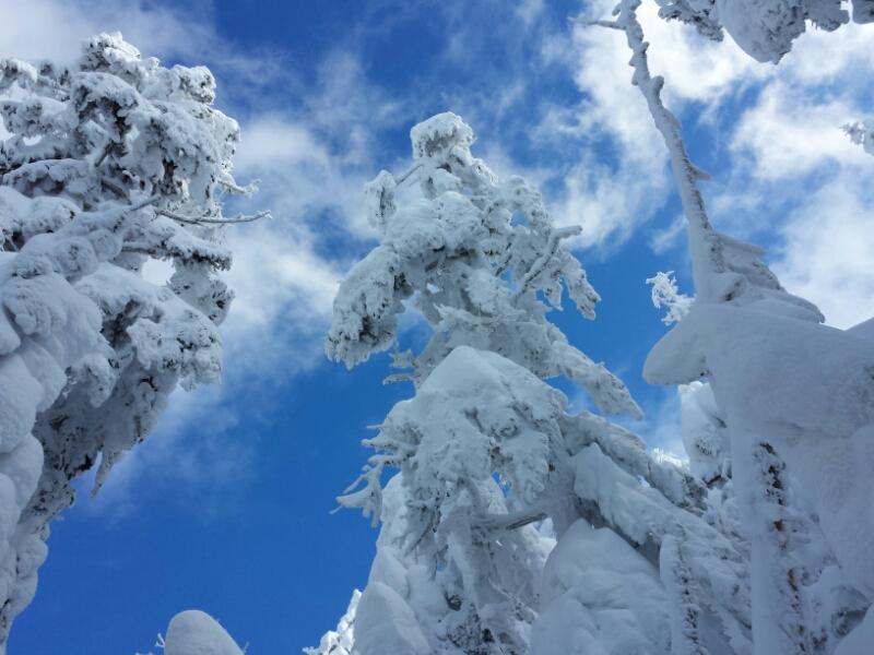 下山の日の登山道_e0155231_20322412.jpg