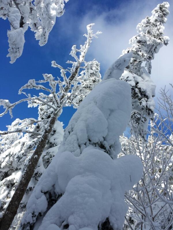 下山の日の登山道_e0155231_2032995.jpg
