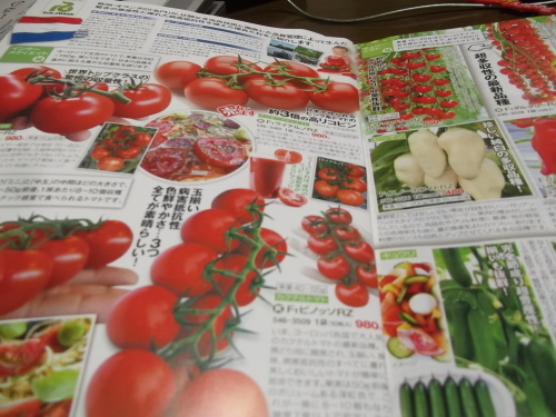 雨の日は..夏野菜の種選び!_b0137932_11582321.jpg