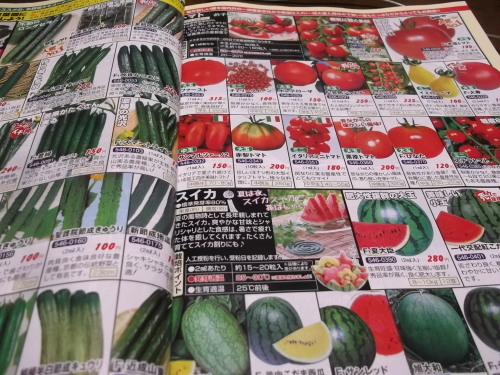 雨の日は..夏野菜の種選び!_b0137932_11583912.jpg