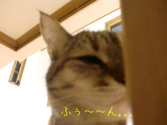c0259945_1438016.jpg