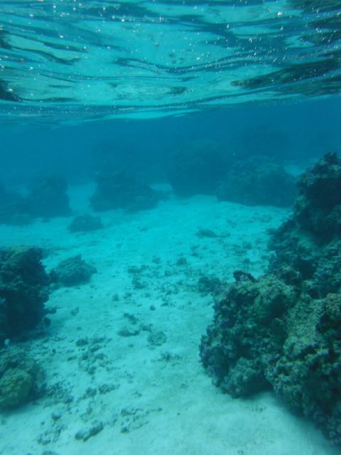 モーレア島の釣りⅡ_f0175450_111620.jpg