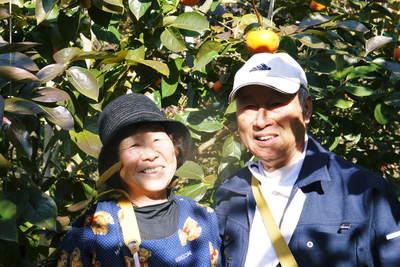 太秋柿 今年も徹底して落ち葉を集め、病気や害虫を防ぎます_a0254656_1714149.jpg