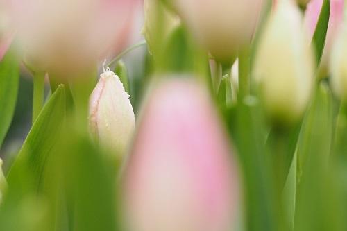 春を待ちながら_a0292060_12055812.jpg