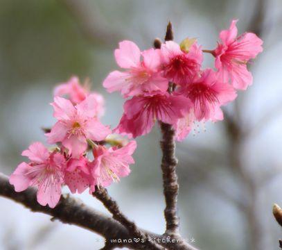 癒し花 (*˘︶˘*).。.:*♡ ☆ bento&晩ご飯♪_c0139375_1253232.jpg
