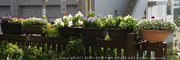 癒し花 (*˘︶˘*).。.:*♡ ☆ bento&晩ご飯♪_c0139375_126538.jpg