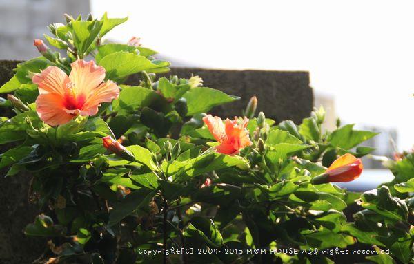 癒し花 (*˘︶˘*).。.:*♡ ☆ bento&晩ご飯♪_c0139375_127037.jpg