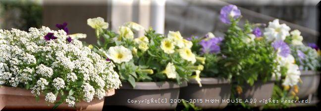 癒し花 (*˘︶˘*).。.:*♡ ☆ bento&晩ご飯♪_c0139375_1271645.jpg