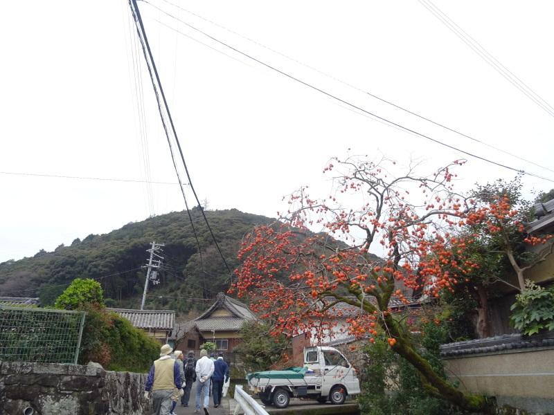 春蘭の道作りが順調に進んでいます  in  孝子の森     by     (TATE-misaki)_c0108460_20042088.jpg