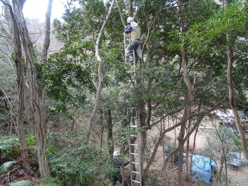 春蘭の道作りが順調に進んでいます  in  孝子の森     by     (TATE-misaki)_c0108460_20103799.jpg