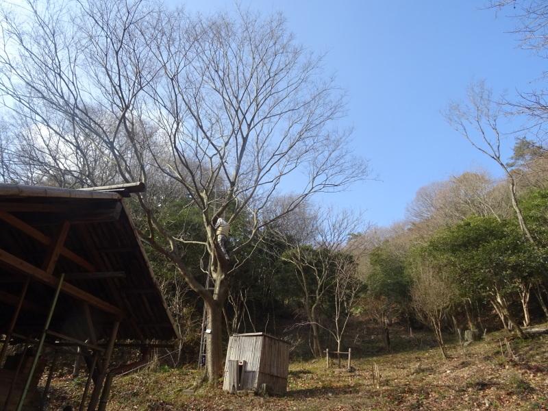 春蘭の道作りが順調に進んでいます  in  孝子の森     by     (TATE-misaki)_c0108460_20103992.jpg