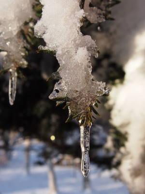 着雪してます_a0129867_8574572.jpg