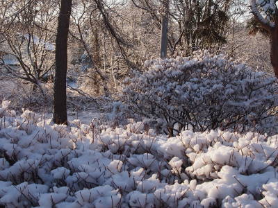 着雪してます_a0129867_857954.jpg