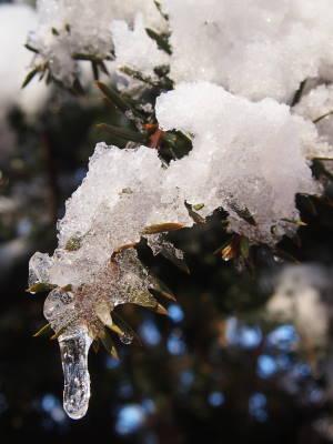 着雪してます_a0129867_858079.jpg