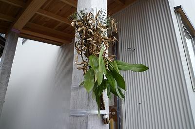 新潟市 外壁工事 ガルバリウム鋼板_c0091593_16431626.jpg