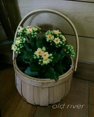 カランコエの鉢カバーに_f0255704_15411234.jpg