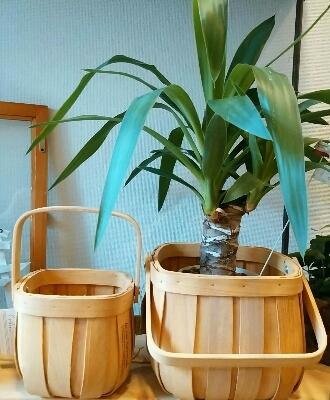 カランコエの鉢カバーに_f0255704_1545183.jpg